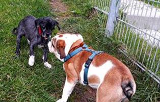 zausel-tagebuch-schlotti-beitragsbild Shih Tzu Zausels Hundetagebuch