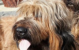 zausel-tagebuch-woche4-beitragsbild Zausels Hundetagebuch - Ich Zausel, du Zausel?