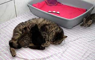 17-katzenbabys-start-ins-leben-patenschaft Tierpate werden