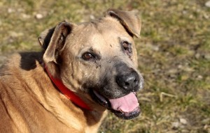 Chewbaka-ist-ein-glücklicher-Hund-300x191 Chewbaka (OH003/18)