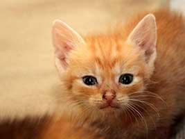 Katzenbaby-4.1-maennlich-geb-1.6.18-Tierschutzliga-Dorf Start-ins-Leben-Patenschaft - Übersicht aller Tierbabys
