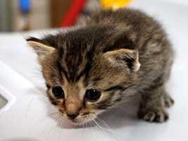Katzenbaby-4.14-weiblich-geb-25.6.18-Tierschutzliga-Dorf Start-ins-Leben-Patenschaft - Übersicht aller Tierbabys