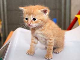 Katzenbaby-4.6-maennlich-geb-25.6.18-Tierschutzliga-Dorf Start-ins-Leben-Patenschaft - Übersicht aller Tierbabys