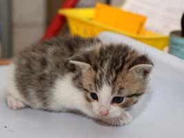 Katzenbaby-4.7-maennlich-geb-25.6.18-Tierschutzliga-Dorf Start-ins-Leben-Patenschaft - Übersicht aller Tierbabys
