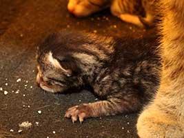 Katzenbaby-4.8-maennlich-geb-18.6.18-Tierschutzliga-Dorf Start-ins-Leben-Patenschaft - Übersicht aller Tierbabys