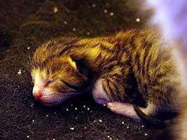 Katzenbaby-4.9-maennlich-geb-18.6.18-Tierschutzliga-Dorf Start-ins-Leben-Patenschaft - Übersicht aller Tierbabys