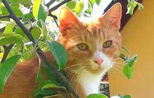 arthur-kater-gluecklich-vermittelt-freiheit Tierische Geschichten - Lustiges und spannendes