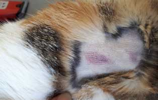 katze-angeschlagen-futterplatz-bauch Schwer angeschlagene Katze brauchte Notbehandlung