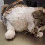 katze-angeschlagen-futterplatz-neurologisch-150x150 Schwer angeschlagene Katze brauchte Notbehandlung
