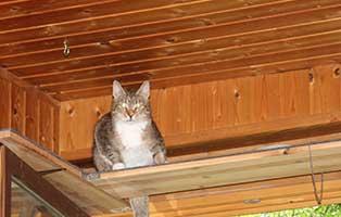 katze-cassandra-gluecklich-vermittelt-klein Glücklich vermittelt - Katzenstation München