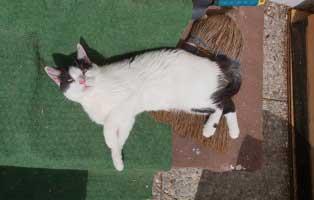 katze-polly-zuhause-gefunden-chillen Glücklich vermittelt - Katzenstation München