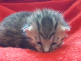 katzenbaby-weiblich-2.5-unterheinsdorf Start-ins-Leben-Patenschaft - Übersicht aller Tierbabys