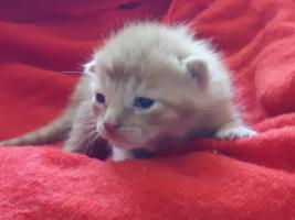 katzenbaby-weiblich-2.6-unterheinsdorf Start-ins-Leben-Patenschaft - Übersicht aller Tierbabys