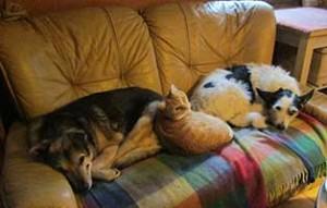 tierparadies-oberdinger-moos-unterbringung-couch-300x191 Das Tierparadies