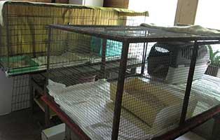 tierparadies-oberdinger-moos-unterbringung-kaefige Das Tierparadies