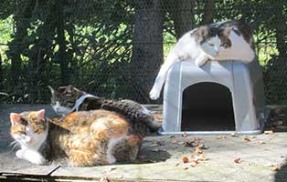 tierparadies-oberdinger-moos-unterbringung-katzen Das Tierparadies