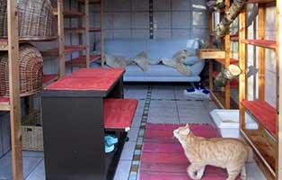 tierparadies-oberdinger-moos-unterbringung-katzenzimmer Das Tierparadies