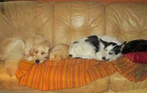 tierparadies-oberdinger-moos-unterbringung-sofa-300x191 Das Tierparadies