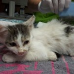 7-verwahrloste-katzen-gerettet-schwarze-150x150 Sieben Katzen - von Parasiten befallen - völlig entkräftet