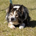 Hund-Filou-macht-platz-trauriges-150x150 Filou - für immer im Herzen