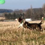 Hund-Filou-spielt-trauriges-150x150 Filou - für immer im Herzen