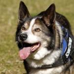 Hund-Filou-trauriges-150x150 Filou - für immer im Herzen
