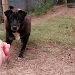 Hund-Kosa-skeptisch-trauriges-150x150 Kosa und Kucita - endlich wieder frei