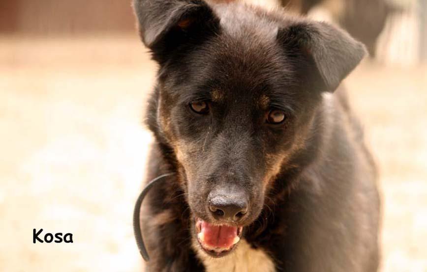Hund-Kosa-trauriges Kosa und Kucita - endlich wieder frei