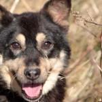 Hund-Kucita-trauriges-150x150 Kosa und Kucita - endlich wieder frei