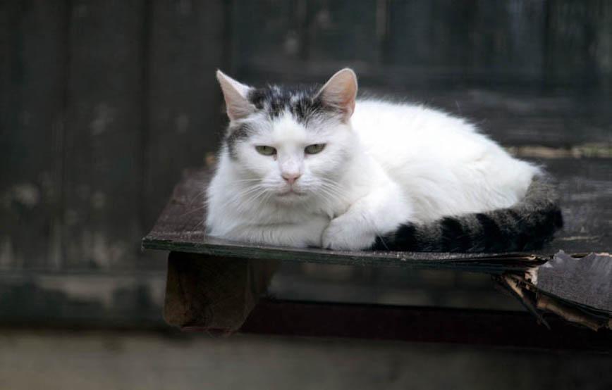 Kater-Peter-trauriges Trauriges - Tierschutzliga Dorf