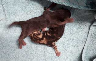 babykatzen-nabelschnur-notfellchen-beide Akute Notfellchen