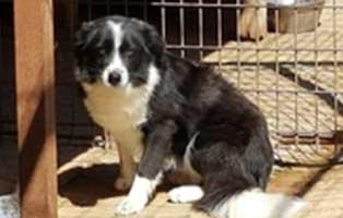hund-rumänien-aaron-aufnahmepatenschaft Wir holen sechs Hunde aus der Smeura - dem größten Tierheim der Welt