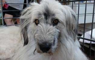 Hunde rumänien vermittlung