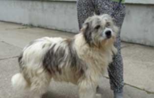 hund-rumänien-laki-aufnahmepatenschaft Wir holen sechs Hunde aus der Smeura - dem größten Tierheim der Welt