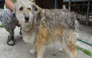 hund-rumänien-roki-aufnahmepatenschaft Wir holen sechs Hunde aus der Smeura - dem größten Tierheim der Welt