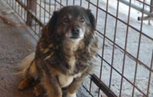 hund-rumänien-vinegar-aufnahmepatenschaft Wir holen sechs Hunde aus der Smeura - dem größten Tierheim der Welt