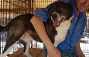 hund-rumänien-zooloo-aufnahmepatenschaft Wir holen sechs Hunde aus der Smeura - dem größten Tierheim der Welt