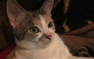 katze-vicky-zuhause-gefunden Schwer angeschlagene Katze brauchte Notbehandlung