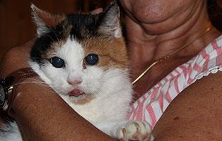 blinde-katze-minka-gluecklich-vermittelt-arm 15 jährige blinde Minka hat ein Zuhause gefunden