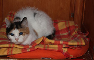 blinde-katze-minka-gluecklich-vermittelt-decke Unsere Tierheimtiere