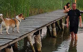 gonzo-hund-erster-urlaub-steg Tierische Geschichten - Lustiges und spannendes