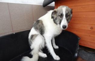 hund-august-smeura Aufnahmepatenschaft für Auslandshunde