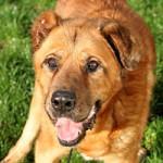 hund-leobär-verstorben-froehlich-1-150x150 Leobär - Ruhe in Frieden