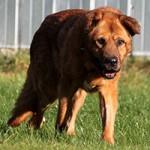 hund-leobär-verstorben-wiese-1-150x150 Leobär - Ruhe in Frieden