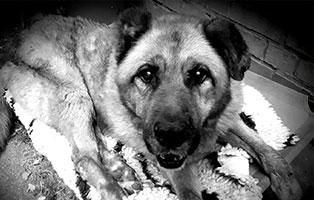 hund-leobär-verstorben Trauriges - wenn ein Tier die Regenbogenbrücke überquert