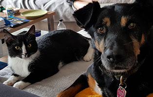 kater-felix-gluecklich-vermittelt-hund Tierische Geschichten - Lustiges und spannendes
