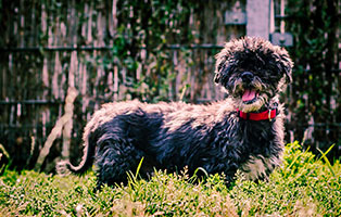 shih-tzu-mix-zausel-fototermin Shih Tzu Zausels Hundetagebuch