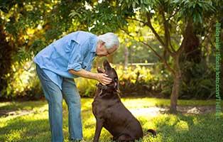 tiervorsorgevertrag-alte-menschen Hundeschlafplatz als Erholungsparadies