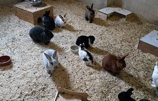 aussengehege-kaninchen-meerschweinchen-richtig Agaporniden - lebenslange Treue