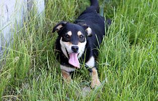 huendin-15Jahr-aufnahmepatenschaft Wieder suchen wir für 4 Hunde Aufnahmepaten